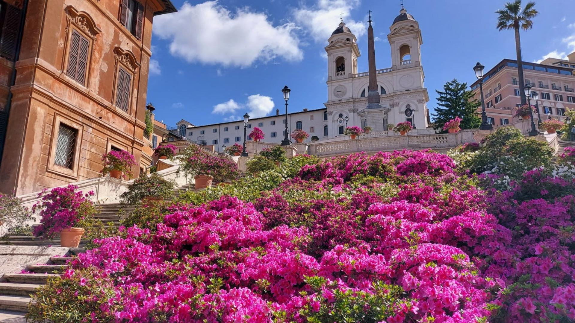 Le azalee capitoline a piazza di Spagna