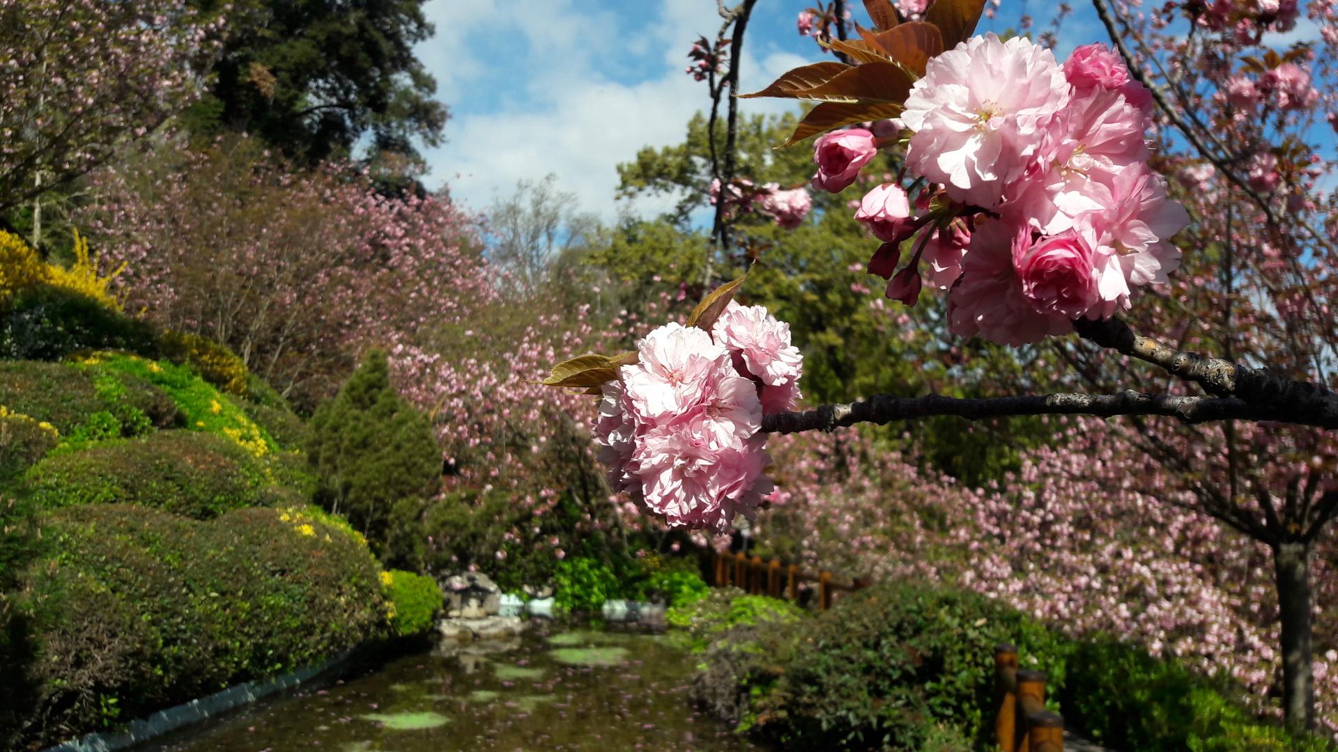 Orto Botanico di Roma - Giardino giapponese_Ph. Tarquini