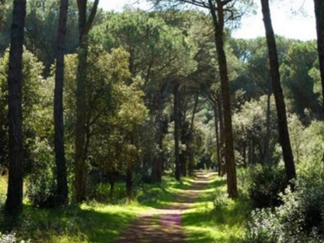 Riserva Naturale Statale del Litorale Romano (Pineta di Castelfusano)