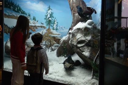 Museo Civico di Zoologia