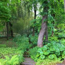 Bosco bambù Orto Botanico