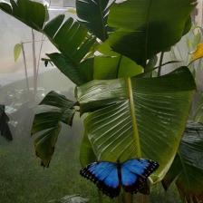 Butterfly Eden ph. Butterfly Eden Official Website
