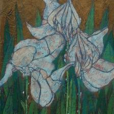 Garth Speight, Iris bianchi, acrilico, cm. 37x52