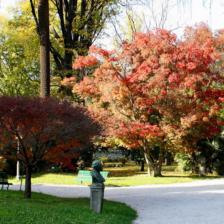 Orto Botanico di Roma - Acer Palmatum