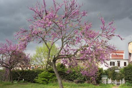 Roma, aprile 2017 - Parco Giordano Sangalli Quartiere Torpignattara