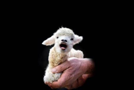 The Lamb Lies Down on Broadway 2.0
