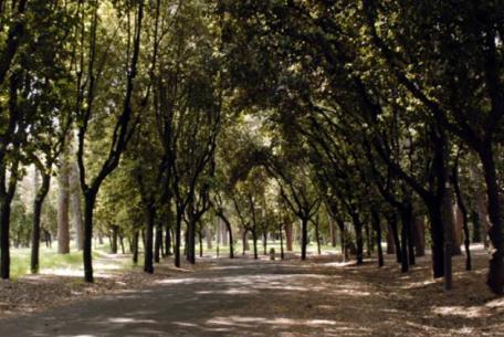Villa Glori - viale del parco