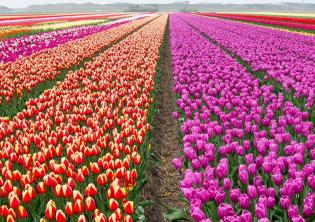 Foto tulipark.it